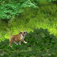 Гра Догляд за тваринами: Приятель бульдог