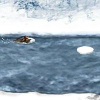 Гра Дісней: Нарнія в льодах!