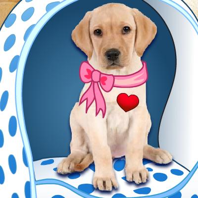 Гра Собаки: Хто твій Вихованець