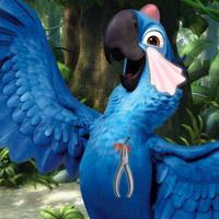 Гра Ріо: Голубчик поранився